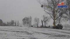 Malbork: Wycinka Topoli przy ul. Rolniczej - 26.02.2013
