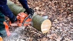 Gmina Stegna. Chcesz usunąć drzewo ze swojej działki? Będziesz musiał to zgłosić - 17.06.2017