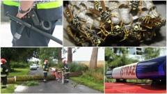 Zatrzymania poszukiwanych i niebezpieczne insekty. Weekendowy raport sztumskich służba mundurowych – 28.08.2017