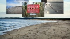 Mikoszewo: Piękna plaża dla miłośników dzikiej przyrody. - 26.11.2017