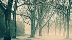 Usuwanie drzew z nieruchomości wpisanej do rejestru zabytków. Zmiana przepisów - 23.01.2018
