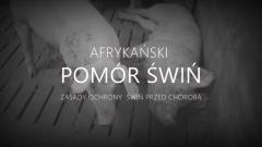 Gmina Nowy Dwór Gdański : Zagrożenie ASF - Zobacz film edukacyjny - 12.03.2018