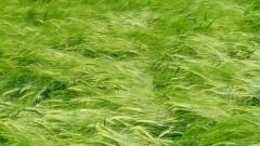 Komunikaty rolnicze Wojewódzkiego Inspektoratu Ochrony Roślin i Nasiennictwa