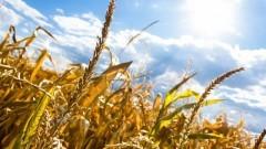 Gmina Sztutowo : Ważny komunikat w sprawie suszy