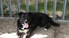 Znaleziono psa w Mątowach Małych. Pomóż znaleźć właściciela.