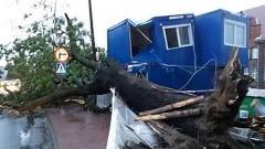O krok od tragedii w centrum Malborka. Powalone drzewo uszkodziło barak dla pracowników budowy. [Zdjęcia]