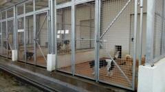 Schronisko Dla Bezdomnych Zwierząt w Starogardzie Gdańskim - wizja lokalna