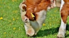 """""""Aktualne zagadnienia związane z chowem i hodowlą bydła mlecznego"""" - konferencja w Starym Polu."""