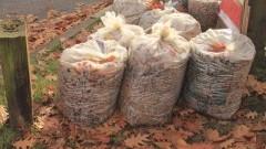 Dodatkowy wywóz bio-odpadów na terenie Gminy Sztutowo