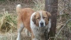 Gmina Stegna: Pomóż odnaleźć właściciela psa. Udostępnij.
