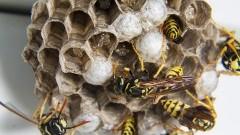 Gniazda owadów i wąż w budynku mieszkalnym – weekendowy raport malborskich służb mundurowych.