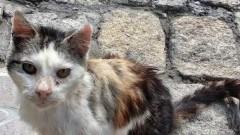 """Citek poszukuje kochającego domu. Malborskie Stowarzyszenie Przyjaciół Zwierząt """"Reks"""" prosi o pomoc dla kotka."""