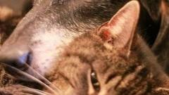 """""""Musi pani przyjechać po kulejącego kota, to wasz obowiązek!"""" - malborski REKS o swojej działalności."""