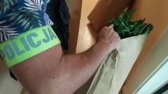 Sztum. Plantacja marihuany zlokalizowana w lesie.
