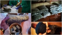 Narkotyki warte 6 mln zł ukryte w magazynach w Malborku.