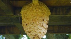 Kokony owadów błonkoskrzydłych i dachowania – raport sztumskich służb mundurowych.