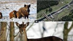 Przekop Mierzei Wiślanej. Co z przejściami dla zwierząt?