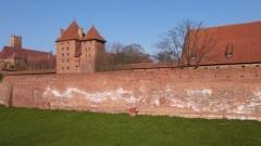 Malbork. Muzeum Zamkowe wyjaśnia skąd biały nalot na średniowiecznych murach.