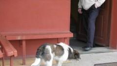 Znaleziono porzuconego psa – 20.04.2016