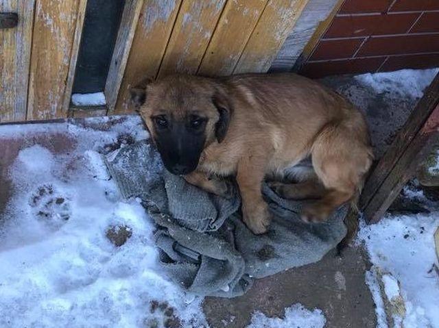 Gmina Stegna : Znaleziono bezdomnego psa w miejscowości Dworek