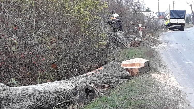 (Nie)bezpieczna droga. Wycinka ok. 900 drzew na trasie Malbork – Dzierzgoń.