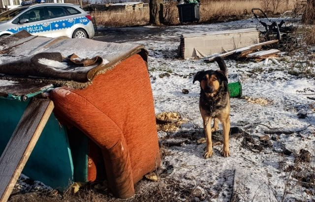Skrajnie zaniedbany bez wody i z raną na szyi. Nowodworska policja uratowała psa.