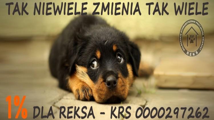 Malborski REKS prosi o wsparcie. Pomóc można na wiele sposobów.