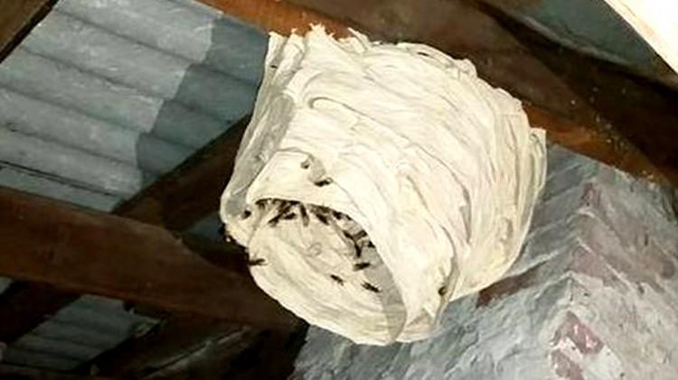 Plaga kokonów owadów – raport sztumskich służb mundurowych.