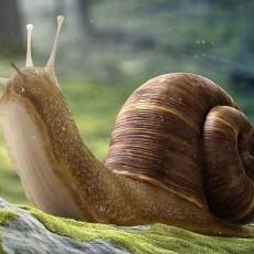 Skup ślimaków- Golden Helix